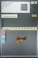 http://mczbase.mcz.harvard.edu/specimen_images/ent-lepidoptera/images/2013_07_19/IMG_145824.JPG