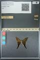 http://mczbase.mcz.harvard.edu/specimen_images/ent-lepidoptera/images/2013_07_19/IMG_145845.JPG