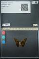 http://mczbase.mcz.harvard.edu/specimen_images/ent-lepidoptera/images/2013_07_23/IMG_146301.JPG