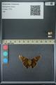 http://mczbase.mcz.harvard.edu/specimen_images/ent-lepidoptera/images/2013_07_23/IMG_146370.JPG