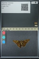http://mczbase.mcz.harvard.edu/specimen_images/ent-lepidoptera/images/2013_07_23/IMG_146374.JPG
