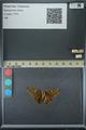 http://mczbase.mcz.harvard.edu/specimen_images/ent-lepidoptera/images/2013_07_23/IMG_146376.JPG