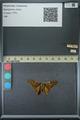 http://mczbase.mcz.harvard.edu/specimen_images/ent-lepidoptera/images/2013_07_23/IMG_146378.JPG
