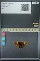 http://mczbase.mcz.harvard.edu/specimen_images/ent-lepidoptera/images/2013_07_23/IMG_146379.JPG