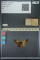 http://mczbase.mcz.harvard.edu/specimen_images/ent-lepidoptera/images/2013_07_23/IMG_146380.JPG