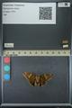 http://mczbase.mcz.harvard.edu/specimen_images/ent-lepidoptera/images/2013_07_23/IMG_146381.JPG