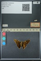 http://mczbase.mcz.harvard.edu/specimen_images/ent-lepidoptera/images/2013_07_23/IMG_146383.JPG