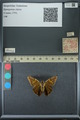 http://mczbase.mcz.harvard.edu/specimen_images/ent-lepidoptera/images/2013_07_23/IMG_146384.JPG