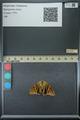 http://mczbase.mcz.harvard.edu/specimen_images/ent-lepidoptera/images/2013_07_23/IMG_146392.JPG