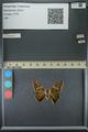 http://mczbase.mcz.harvard.edu/specimen_images/ent-lepidoptera/images/2013_07_25/IMG_146491.JPG