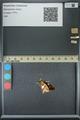 http://mczbase.mcz.harvard.edu/specimen_images/ent-lepidoptera/images/2013_07_25/IMG_146496.JPG