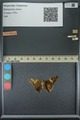 http://mczbase.mcz.harvard.edu/specimen_images/ent-lepidoptera/images/2013_07_25/IMG_146514.JPG