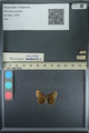 http://mczbase.mcz.harvard.edu/specimen_images/ent-lepidoptera/images/2013_08_01/IMG_147348.JPG