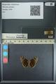 http://mczbase.mcz.harvard.edu/specimen_images/ent-lepidoptera/images/2013_08_01/IMG_147353.JPG