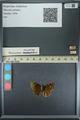 http://mczbase.mcz.harvard.edu/specimen_images/ent-lepidoptera/images/2013_08_01/IMG_147354.JPG