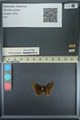 http://mczbase.mcz.harvard.edu/specimen_images/ent-lepidoptera/images/2013_08_01/IMG_147355.JPG