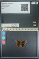 http://mczbase.mcz.harvard.edu/specimen_images/ent-lepidoptera/images/2013_08_01/IMG_147357.JPG
