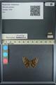http://mczbase.mcz.harvard.edu/specimen_images/ent-lepidoptera/images/2013_08_01/IMG_147358.JPG
