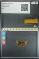 http://mczbase.mcz.harvard.edu/specimen_images/ent-lepidoptera/images/2013_08_02/IMG_147362.JPG