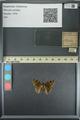 http://mczbase.mcz.harvard.edu/specimen_images/ent-lepidoptera/images/2013_08_02/IMG_147366.JPG