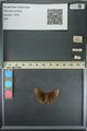 http://mczbase.mcz.harvard.edu/specimen_images/ent-lepidoptera/images/2013_08_02/IMG_147367.JPG