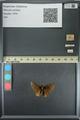 http://mczbase.mcz.harvard.edu/specimen_images/ent-lepidoptera/images/2013_08_02/IMG_147373.JPG