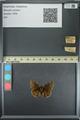 http://mczbase.mcz.harvard.edu/specimen_images/ent-lepidoptera/images/2013_08_02/IMG_147374.JPG