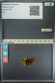 http://mczbase.mcz.harvard.edu/specimen_images/ent-lepidoptera/images/2013_08_02/IMG_147378.JPG