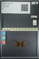 http://mczbase.mcz.harvard.edu/specimen_images/ent-lepidoptera/images/2013_08_02/IMG_147380.JPG