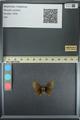 http://mczbase.mcz.harvard.edu/specimen_images/ent-lepidoptera/images/2013_08_02/IMG_147381.JPG