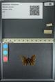 http://mczbase.mcz.harvard.edu/specimen_images/ent-lepidoptera/images/2013_08_02/IMG_147385.JPG