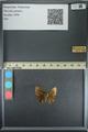 http://mczbase.mcz.harvard.edu/specimen_images/ent-lepidoptera/images/2013_08_02/IMG_147387.JPG