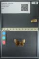 http://mczbase.mcz.harvard.edu/specimen_images/ent-lepidoptera/images/2013_08_02/IMG_147389.JPG