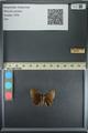 http://mczbase.mcz.harvard.edu/specimen_images/ent-lepidoptera/images/2013_08_02/IMG_147391.JPG