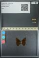http://mczbase.mcz.harvard.edu/specimen_images/ent-lepidoptera/images/2013_08_02/IMG_147392.JPG