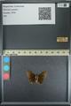 http://mczbase.mcz.harvard.edu/specimen_images/ent-lepidoptera/images/2013_08_02/IMG_147393.JPG