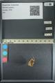 http://mczbase.mcz.harvard.edu/specimen_images/ent-lepidoptera/images/2013_08_02/IMG_147395.JPG