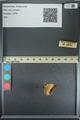 http://mczbase.mcz.harvard.edu/specimen_images/ent-lepidoptera/images/2013_08_02/IMG_147397.JPG