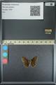 http://mczbase.mcz.harvard.edu/specimen_images/ent-lepidoptera/images/2013_08_02/IMG_147398.JPG
