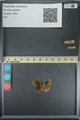 http://mczbase.mcz.harvard.edu/specimen_images/ent-lepidoptera/images/2013_08_02/IMG_147399.JPG