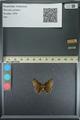 http://mczbase.mcz.harvard.edu/specimen_images/ent-lepidoptera/images/2013_08_02/IMG_147400.JPG