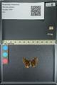 http://mczbase.mcz.harvard.edu/specimen_images/ent-lepidoptera/images/2013_08_02/IMG_147401.JPG