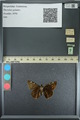 http://mczbase.mcz.harvard.edu/specimen_images/ent-lepidoptera/images/2013_08_02/IMG_147403.JPG