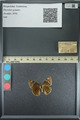http://mczbase.mcz.harvard.edu/specimen_images/ent-lepidoptera/images/2013_08_02/IMG_147404.JPG