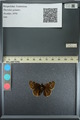 http://mczbase.mcz.harvard.edu/specimen_images/ent-lepidoptera/images/2013_08_02/IMG_147405.JPG