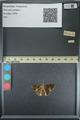 http://mczbase.mcz.harvard.edu/specimen_images/ent-lepidoptera/images/2013_08_02/IMG_147406.JPG