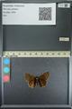 http://mczbase.mcz.harvard.edu/specimen_images/ent-lepidoptera/images/2013_08_02/IMG_147408.JPG
