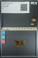 http://mczbase.mcz.harvard.edu/specimen_images/ent-lepidoptera/images/2013_08_02/IMG_147409.JPG
