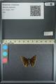 http://mczbase.mcz.harvard.edu/specimen_images/ent-lepidoptera/images/2013_08_02/IMG_147411.JPG