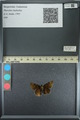 http://mczbase.mcz.harvard.edu/specimen_images/ent-lepidoptera/images/2013_08_02/IMG_147412.JPG